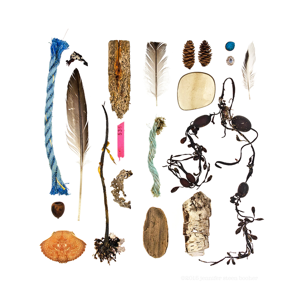 polypropylene trap line, acorn, Rock Crab (Cancer irroratus), Fucus sp. with Spirorbis sp., feather, holdfast, driftwood, lobster trap tag, seaweed covered in bryozoan colony, feather, trap rope, driftwood, spruce cones, sunglasses lens, Ascophyllum nodusum, birch bark (Betula papyrifera), painted wood peg, Tortoiseshell Limpet (Testudinalia testudinalis), feather