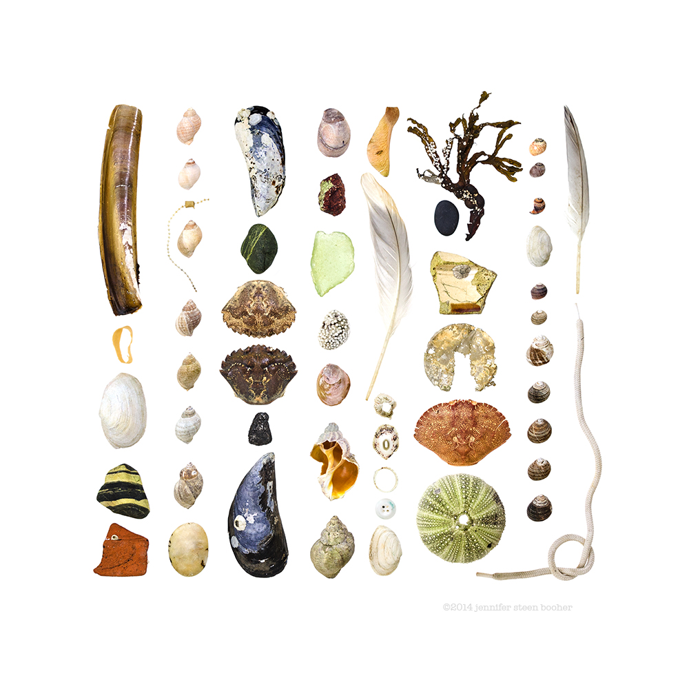 Bar Harbor, beach, Beachcombing, found objects, littoral zone, Maine, marine biology, Mount Desert Island, natural history, New England, seashore, The Bar, The Beachcombing Series