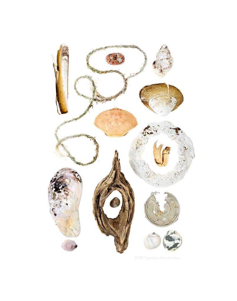 Coast Walk, Razor Clam (Ensis directus), lobster trap rope, Horse Mussel (Modiolus modiolus), Common Slipper Shell (Crepidula fornicata), pink granite beach stone, Rock Crab (Cancer irroratus), driftwood, Common Periwinkle (Littorina littorea), Waved Whelk (Buccinum undatum), Quahog (Mercenaria mercenaria), crab claw, aluminum can top, Moon Snail (Lunatia heros), beach stone